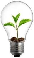 2013-07-15 Grönskande glödlampa