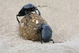 Dyngbaggar
